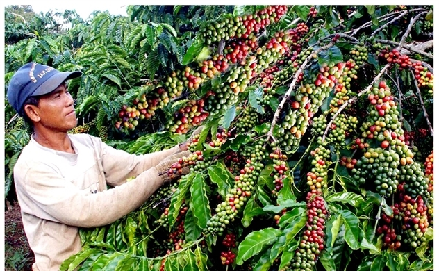 Asia Coffee-Vietnam prices edge up as farmers hold off selling: Reuters