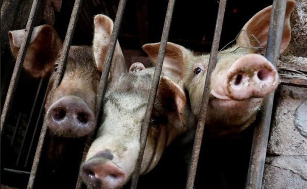 Vietnam's pork imports more than double amid swine fever outbreak: Reuters