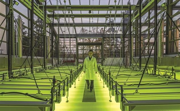 Vi tảo cứu tinh môi trường