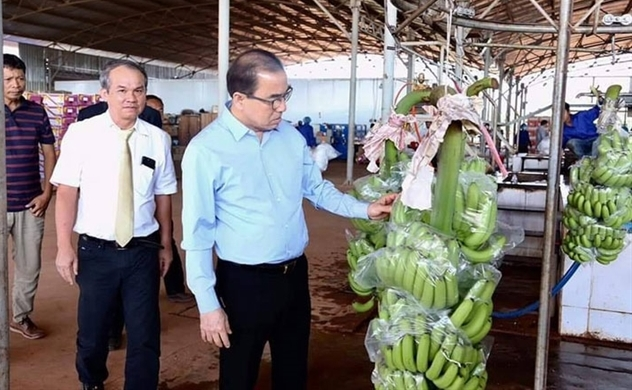 HAGL Agrico to export bananas to Chinese market: Khmer Times