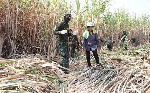 """Ngành mía đường của Việt Nam có trụ vững trước cơn """"bão"""" ATIGA?"""