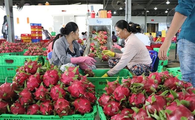 Nông sản Việt 'lao đao' vì virus corona