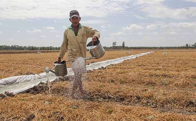 Mekong Delta farmers suffer double whammy of drought and coronavirus