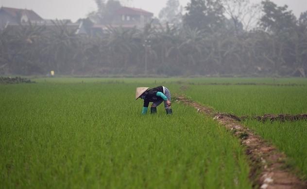 Vietnam's Mekong Delta declares emergency on devastating drought: Bloomberg