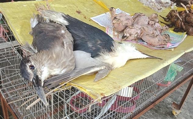 Chặn mọi ngả đường buôn bán động vật hoang dã!