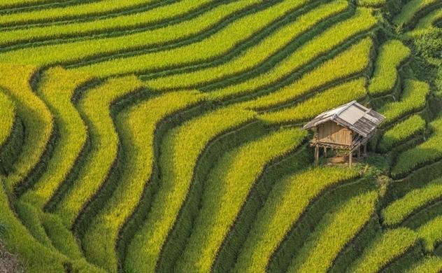 Bloomberg: Vietnam's Rice Trade Thrown Into Turmoil on Export Halt Muddle