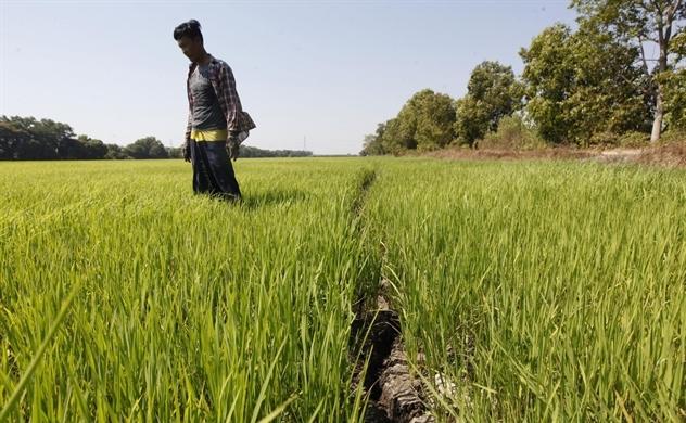 Hai kịch bản về an ninh lương thực, xuất khẩu gạo trong dịch Covid-19