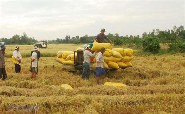 Dự trữ lương thực của quốc gia luôn đảm bảo đáp ứng trong tình huống khẩn cấp xảy ra