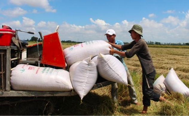 Vietnam government advised to resume rice exports