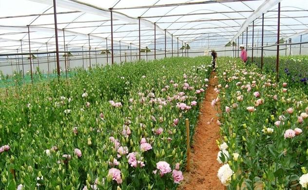 Công nghiệp hoa héo hon trong mùa dịch