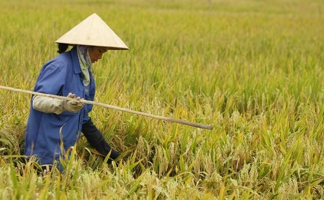 Nông nghiệp là số 1, nông dân không thể là số 2