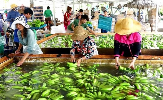 Vietnam's agriculture sector gains trade surplus of $2.8bln in 4 months