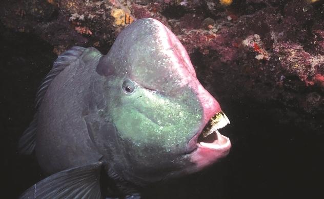Ngừng đánh bắt cá mỏ đầu u!