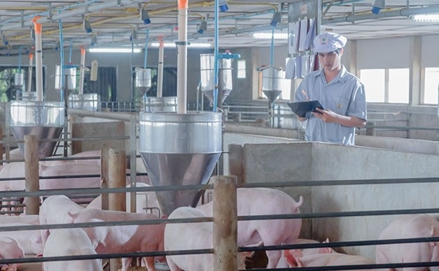 Vietnam's pork shortage spikes Thai agro-industrial and food conglomerate's incomes