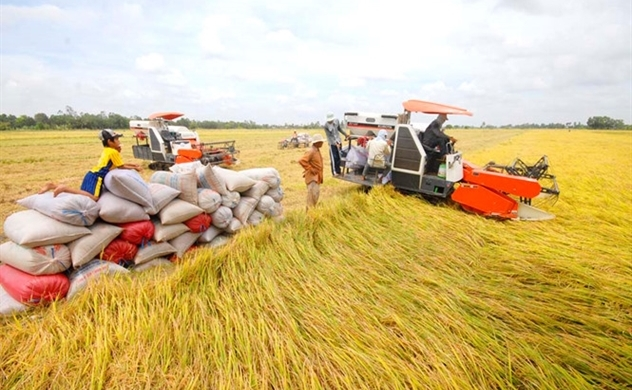 Vietnam plans to export 7mln tonnes rice this year, up nearly 10%