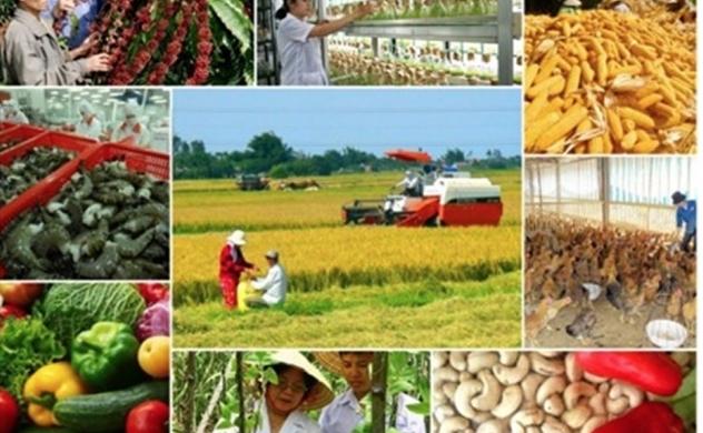 Kinh tế Việt Nam 6 tháng đầu năm: Nông nghiệp là