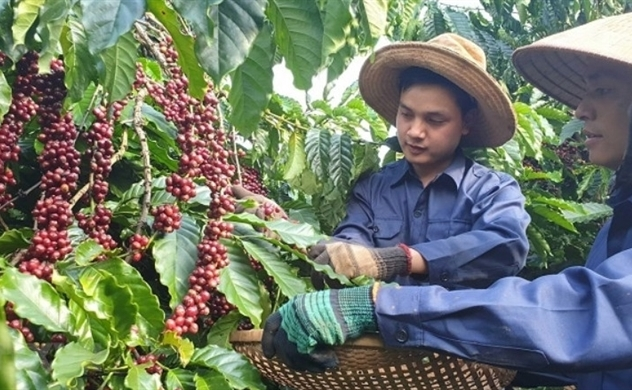 Coffee industry earns $1.6 billion in first half of 2020