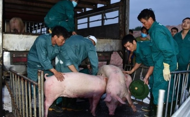 Thailand moves to reduce pork exports to Vietnam