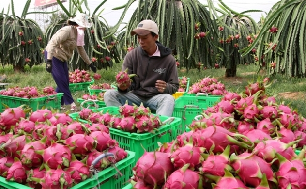 Vietnam bags $2bln from fruit and vegetable exports in first seven months