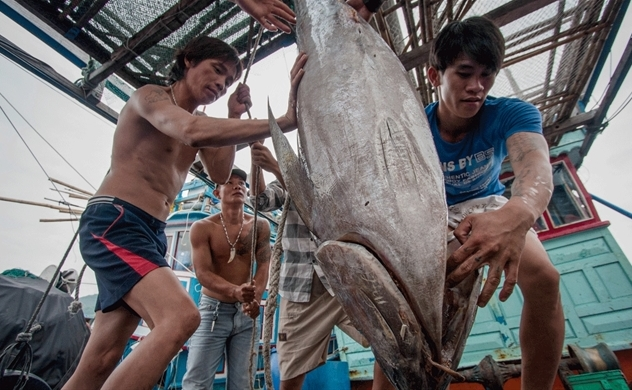 Tuna exports to EU surge thanks to trade deal
