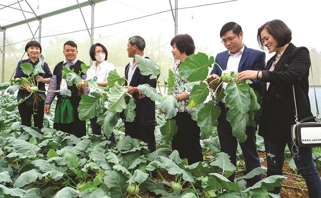 Vé thông hành cho nông sản vùng cao