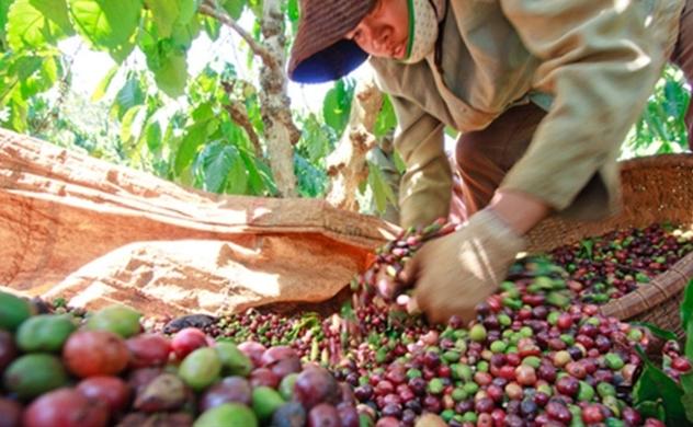 Vietnam's trade surplus hits $14.5 billion mid-Sept.