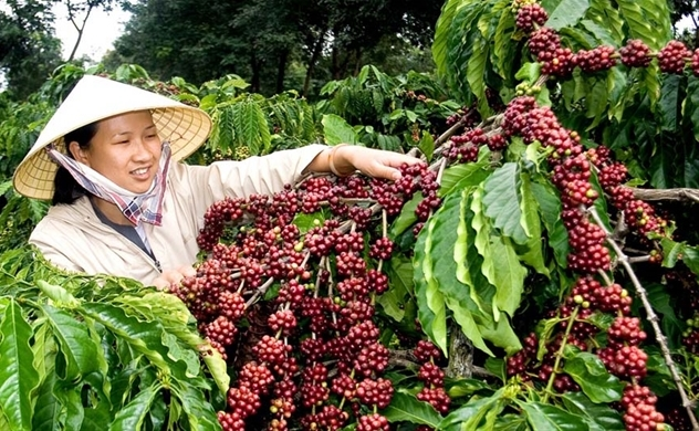 Vietnam becomes Japan's biggest coffee supplier on pandemic