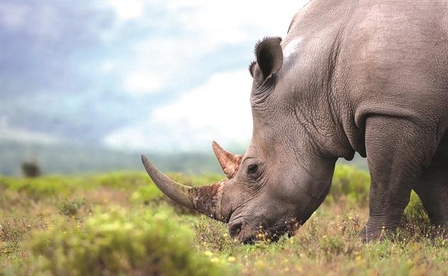 Lá chắn trong cuộc chiến bảo vệ thiên nhiên