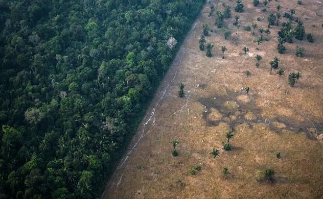 Rừng nhiệt đới Amazon có thể sớm trở thành thảo nguyên do biến đổi khí hậu