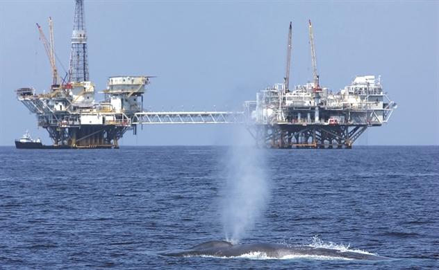 Ô nhiễm tiếng ồn: Sát thủ đại dương