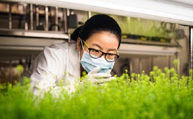76 triệu liều vắc-xin COVID-19 có nguồn gốc từ thực vật đang được nghiên cứu