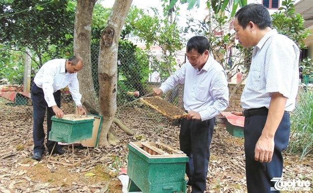 Tìm thương hiệu cho mật ong Việt