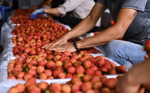 World's largest trade pact RCEP to provide fillip to Vietnam's exports