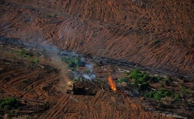 Nạn phá rừng Amazon ở Brazil tăng lên mức cao nhất trong 12 năm