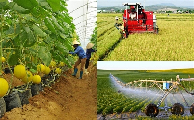 Tại sao các nhà đầu tư ngoại không mặn mà với nông nghiệp Việt Nam?