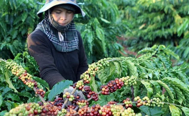 Coffee exports bring Vietnam $2.7 bln in 2020