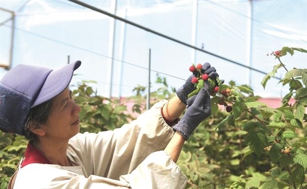Rau quả Việt lên ngôi tại thị trường Nhật, Hàn