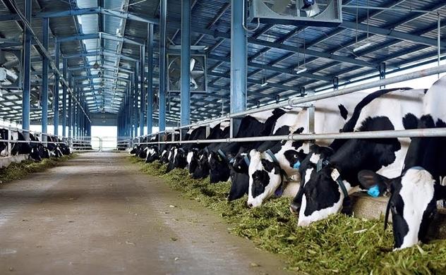 Ai đang đứng đầu thị phần ngành sữa?