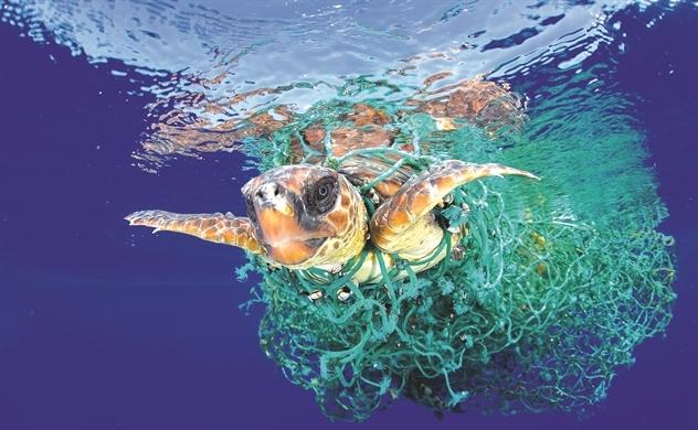 Lưới xanh giải phóng đại dương