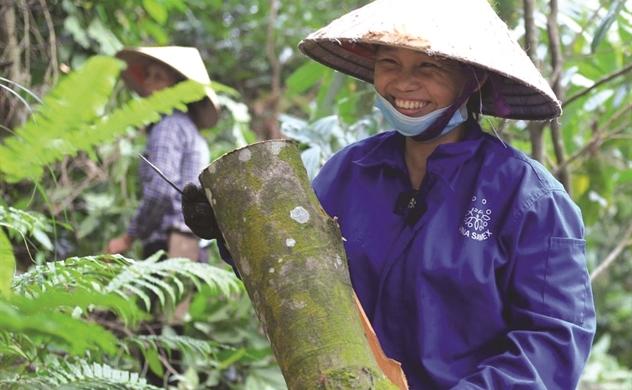 Tăng giá trị cho dược liệu Việt