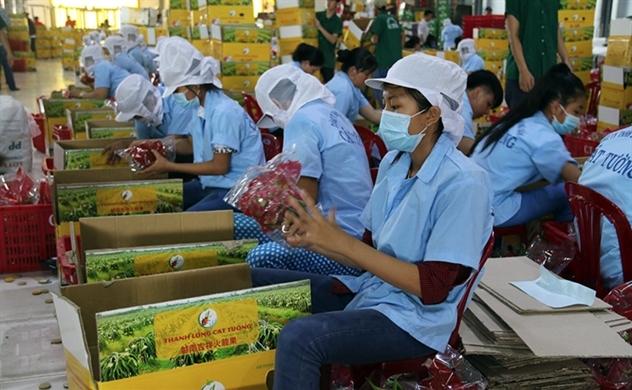 Nhiều tín hiệu vui cho xuất khẩu nông sản Việt