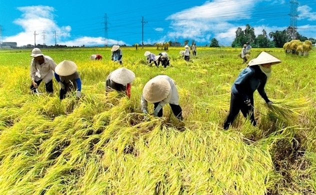 Vietnam would continue to be world's second largest rice exporter: US department