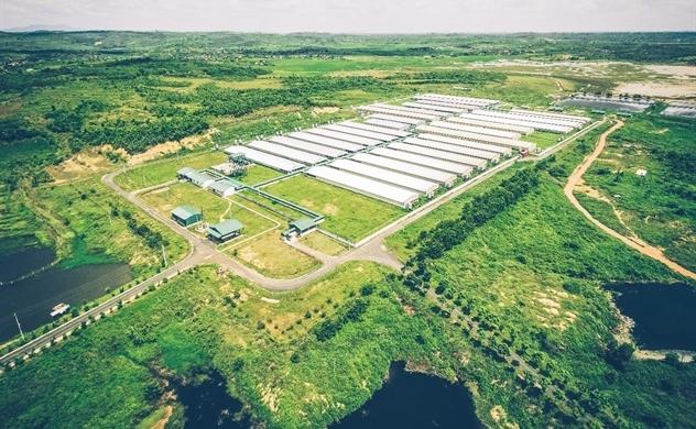 Xuất khẩu heo giống chất lượng cao, GREENFEED mở rộng thị trường ra khu vực