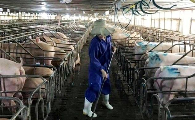 Chăn nuôi Mitraco chốt quyền chia cổ tức tiền mặt đợt 1 tỷ lệ 40%