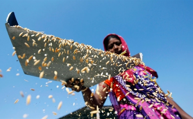Five local rice firms to be inspected after imports of Indian rice surge