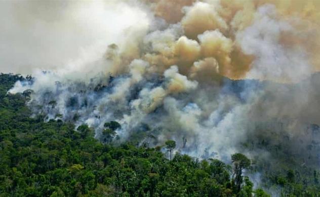 Rừng Amazon thải carbon nhiều hơn mức hấp thu